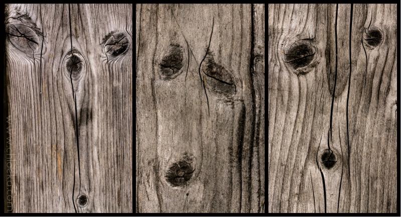 Quand le bois nous regarde - spéciale dédicace à Sarra !