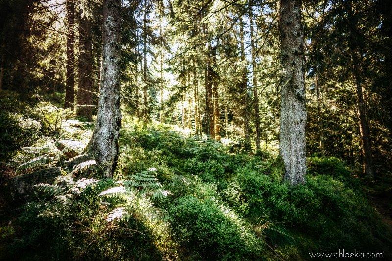 chloeka-badener-hohe-foret-noire-octobre-2016-41b