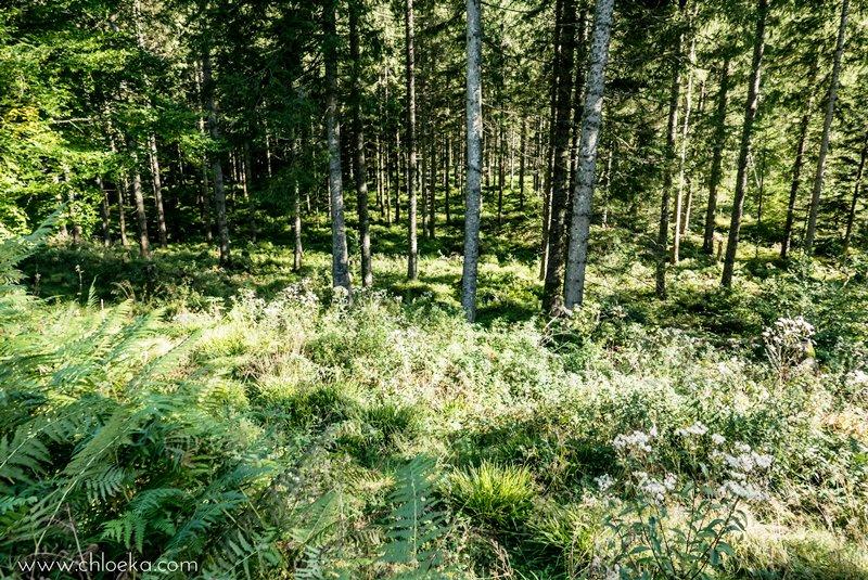 chloeka-badener-hohe-foret-noire-octobre-2016-63