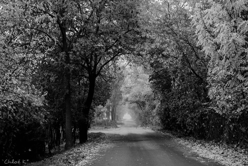 L'infinie de la route désertée * Automne *