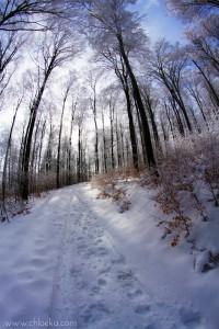 chloeka- Forêt sous la neige Champ du Feu- fév 2016-5