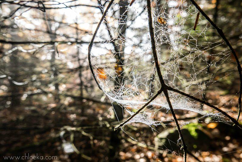 chloeka- Guirbaden branche, toile et lumière 1er nov 2015