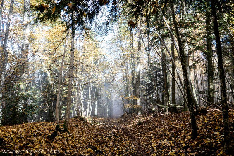 chloeka- Guirbaden chemin entre la lumière et la brume 1er nov 2015