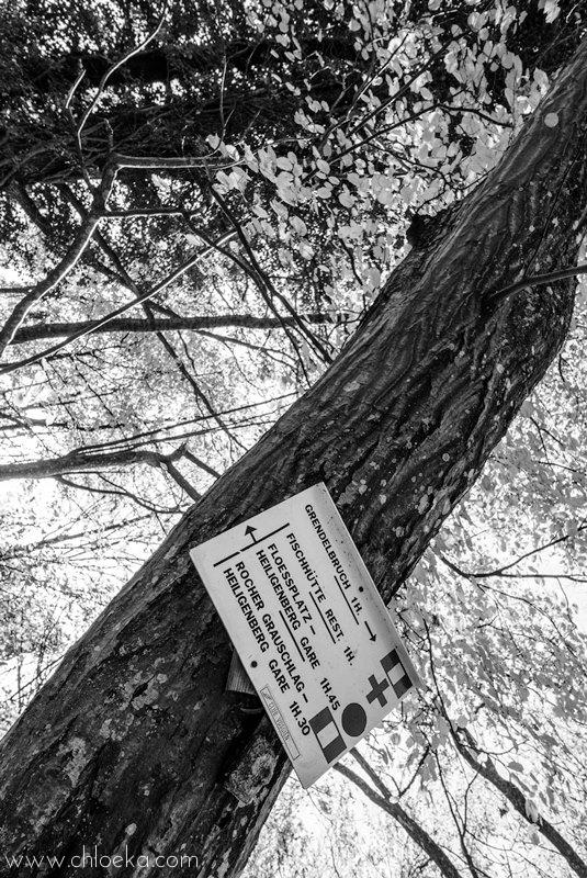 chloeka- Guirbaden sous bois panneau 1er nov 2015