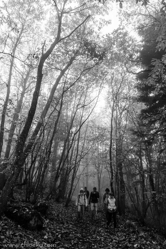 chloeka- Guirbaden sous bois roux 1er nov 2015 nb
