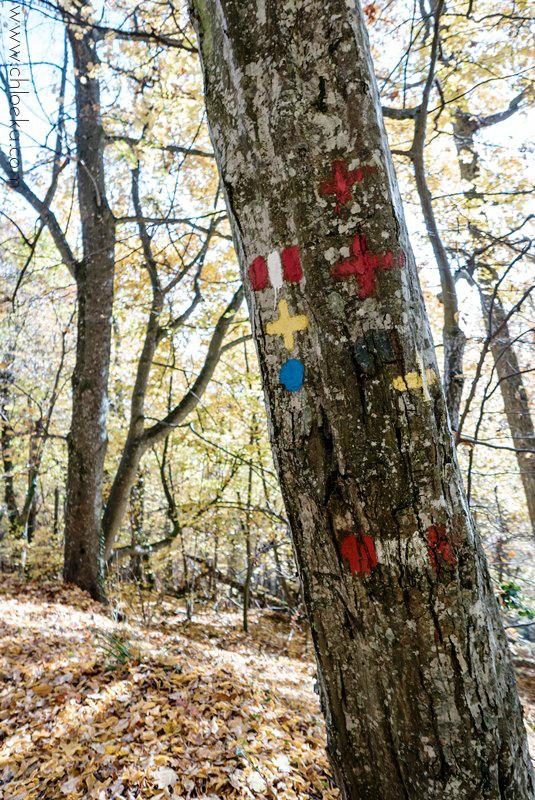 chloeka- Guirbaden tronc indicatif 1er nov 2015