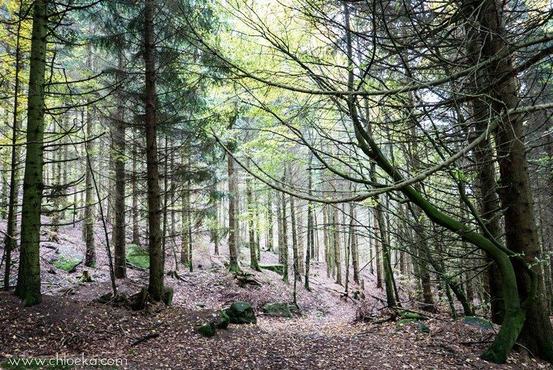 chloeka-hertahutte-buhlertal-octobre-2016-34