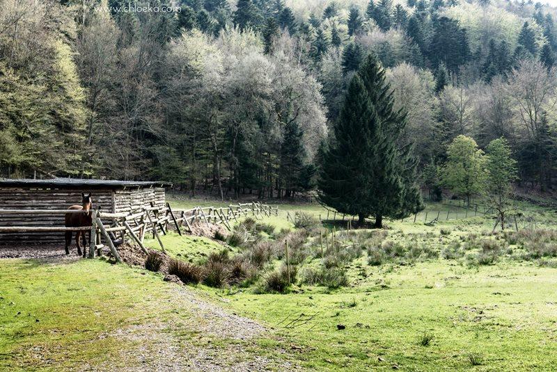 chloeka- La Hoube Geisfels chateau d'Ochsenstein- avril 2016-20