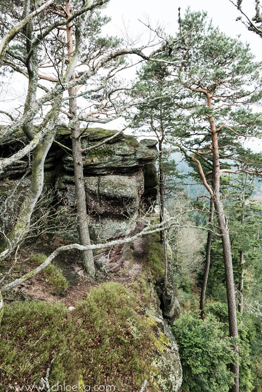 chloeka- La Hoube Geisfels chateau d'Ochsenstein- avril 2016-34