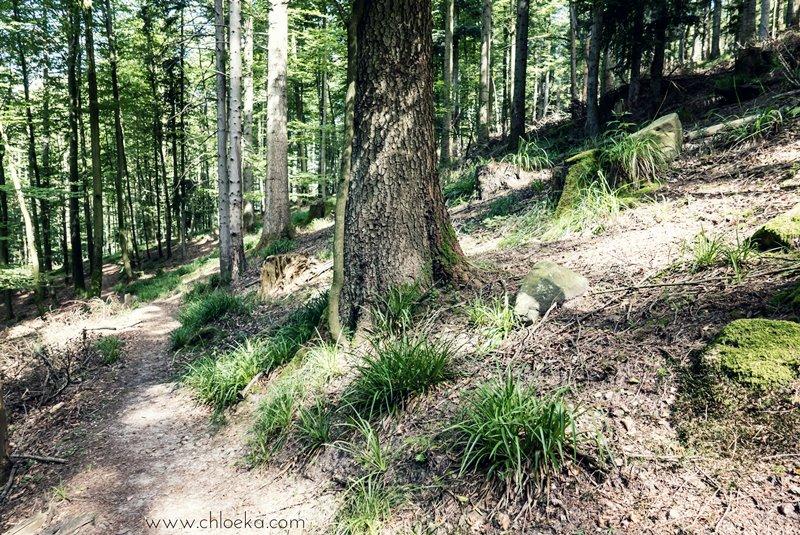 chloeka- Lutzelhouse Rocher de Mutzig- juillet 2016-2