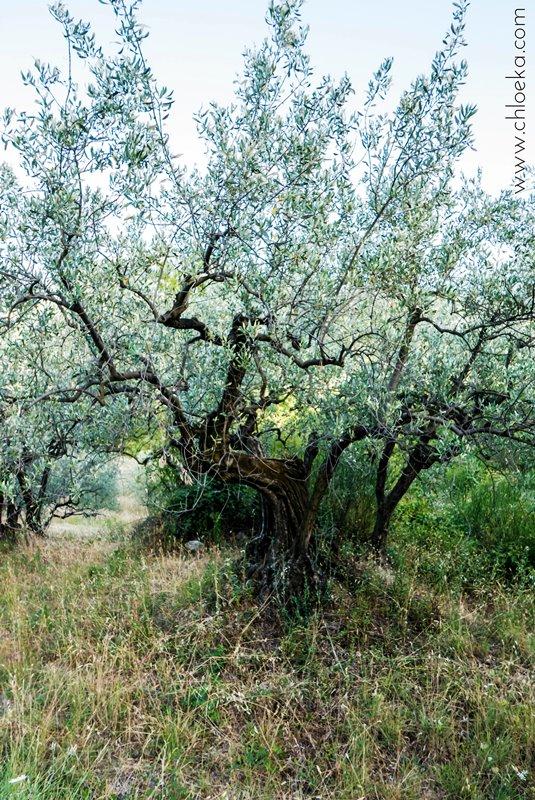 chloeka-- Montguers Drôme - Journée 2 Gorges et Cols dans les Baronnies - 8 aout 2016-37