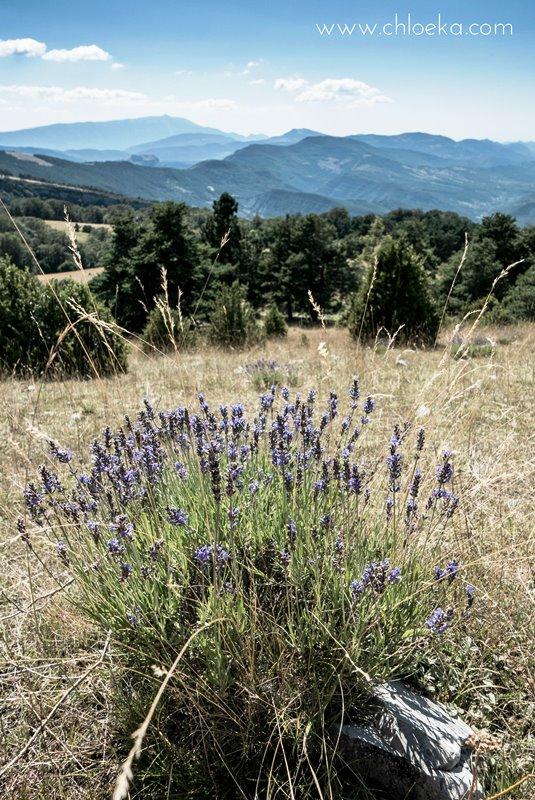 chloeka-- Montguers Drôme - montagne de Chamouse - 7 aout 2016-44
