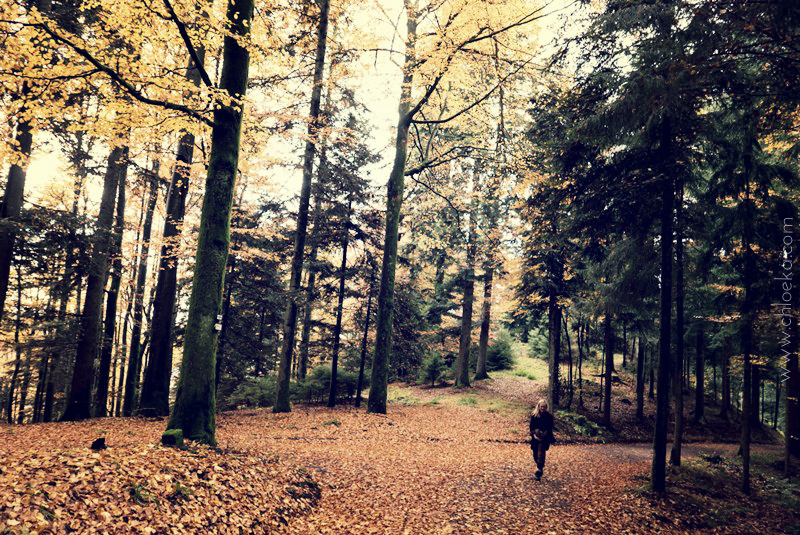 chloeka- Rando à Riersbach avec Malili- octobre 2015-29