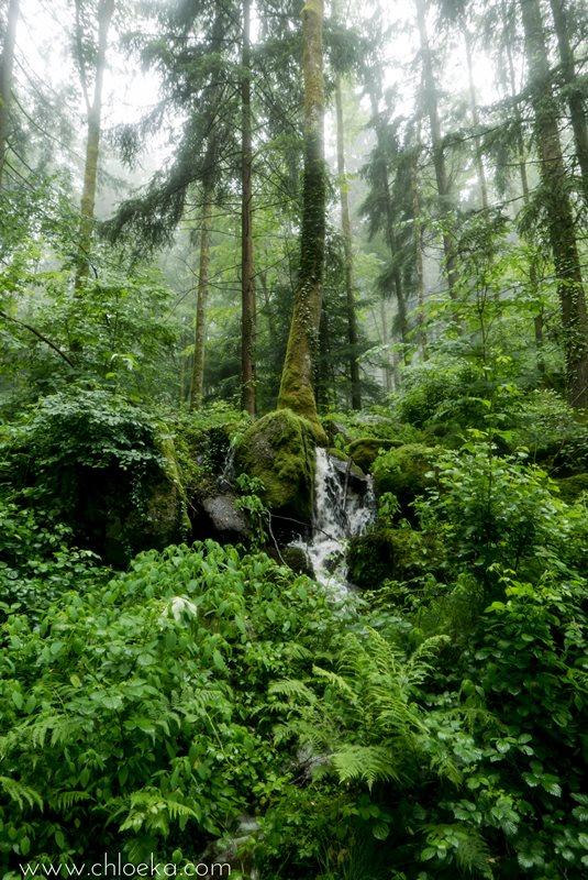 chloeka- Randonnée à Kappelrodeck en Forêt Noire- juin 2016-10