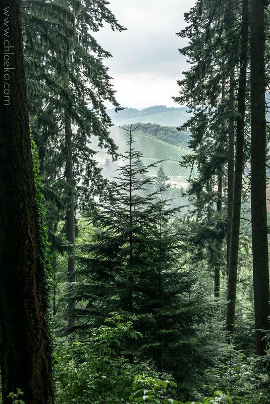 chloeka- Randonnée à Kappelrodeck en Forêt Noire- juin 2016-11