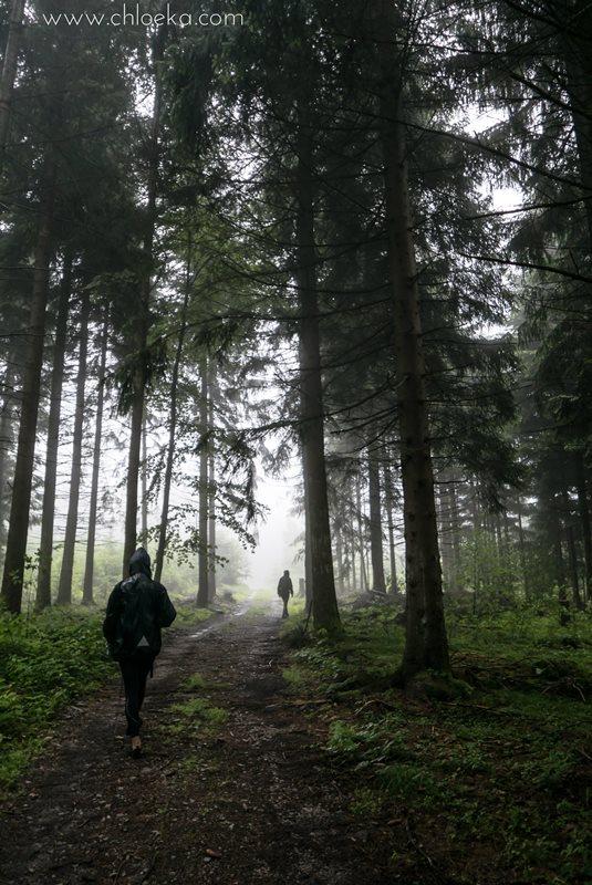 chloeka- Randonnée à Kappelrodeck en Forêt Noire- juin 2016-14
