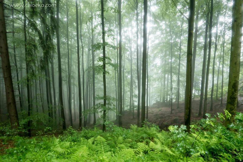 chloeka- Randonnée à Kappelrodeck en Forêt Noire- juin 2016-3
