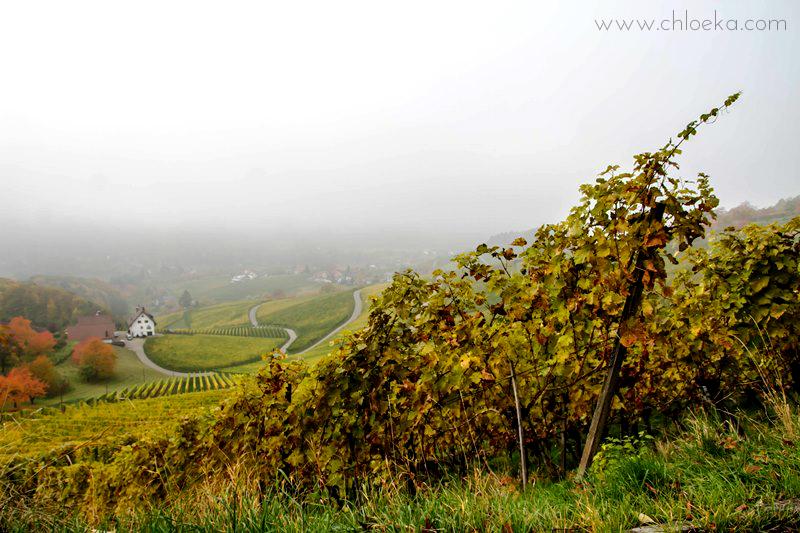chloeka- Randonnée à Sasbachwalden en Forêt Noire- octobre 2015-115