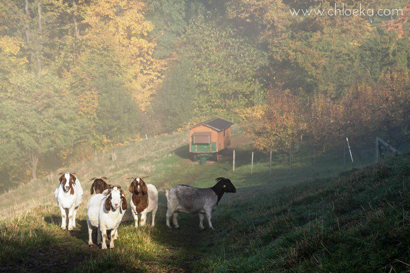 chloeka- Randonnée à Sasbachwalden en Forêt Noire- octobre 2015-13