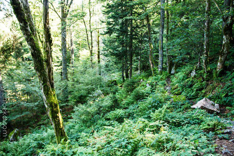 chloeka- Randonnée Gazon de Faing - Aout 2015 --11