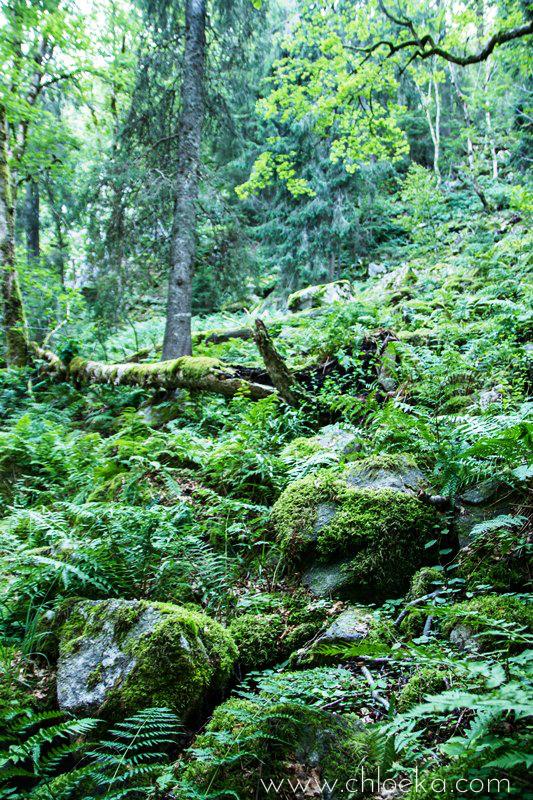 chloeka- Randonnée Gazon de Faing - Aout 2015 --12