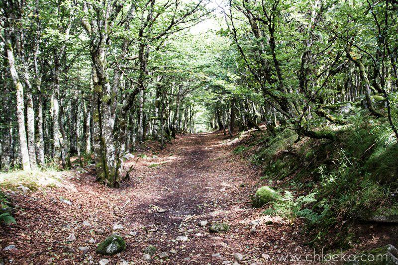 chloeka- Randonnée Gazon de Faing - Aout 2015-2