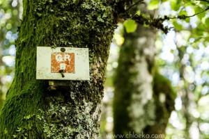 chloeka- Randonnée Gazon de Faing - Aout 2015 -GR5