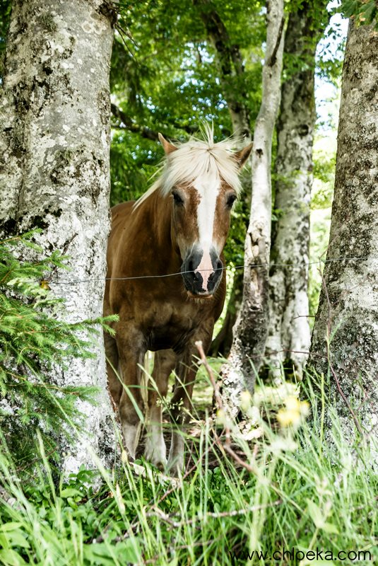 chloeka- Randonnée Todtnau Wasserfall- 16 juillet 2016-15