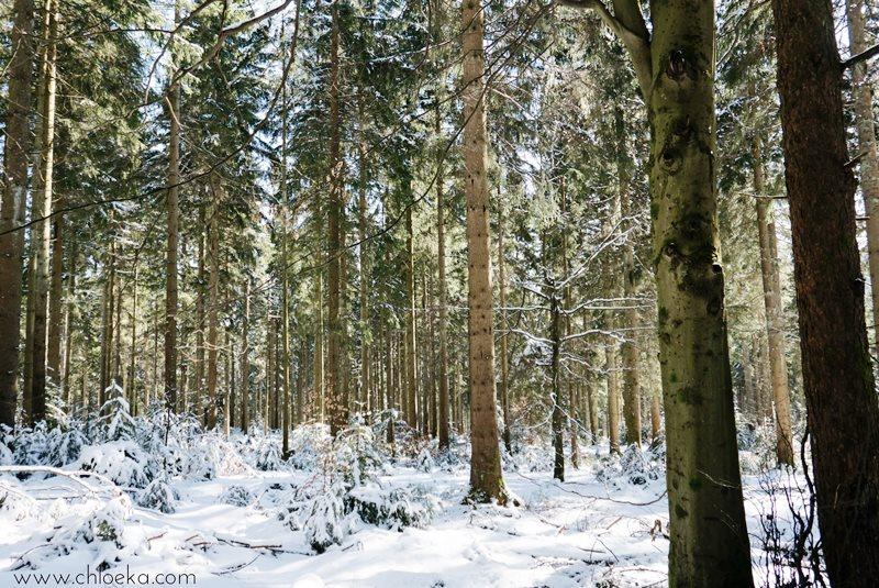 chloeka- Randonnée en Forêt Noire autour de Sand- fév 2016-2