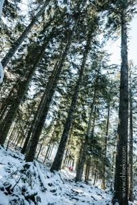 chloeka- Randonnée en Forêt Noire autour de Sand- fév 2016-27