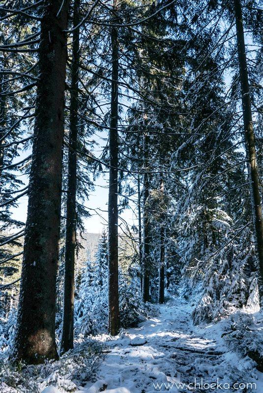 chloeka- Randonnée en Forêt Noire autour de Sand- fév 2016-28