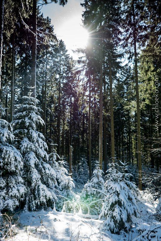 chloeka- Randonnée en Forêt Noire autour de Sand- fév 2016-3