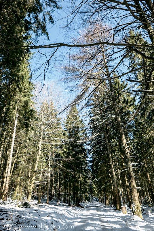 chloeka- Randonnée en Forêt Noire autour de Sand- fév 2016