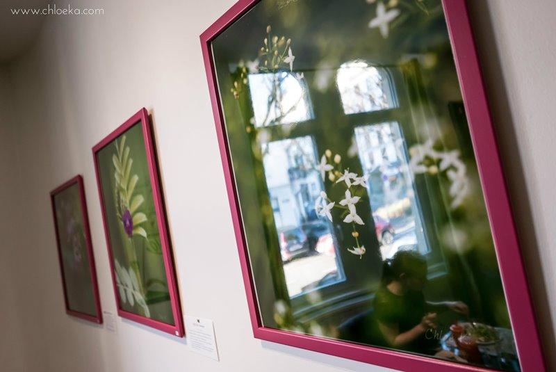 chloeka-exposition-simplicis-herbae-a-velicious-nov-2016