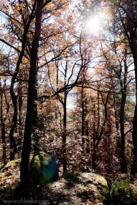 chloeka- grendelbruch rousseurs 1er nov 2015-2