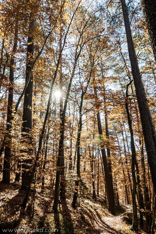 chloeka- grendelbruch rousseurs 1er nov 2015-3