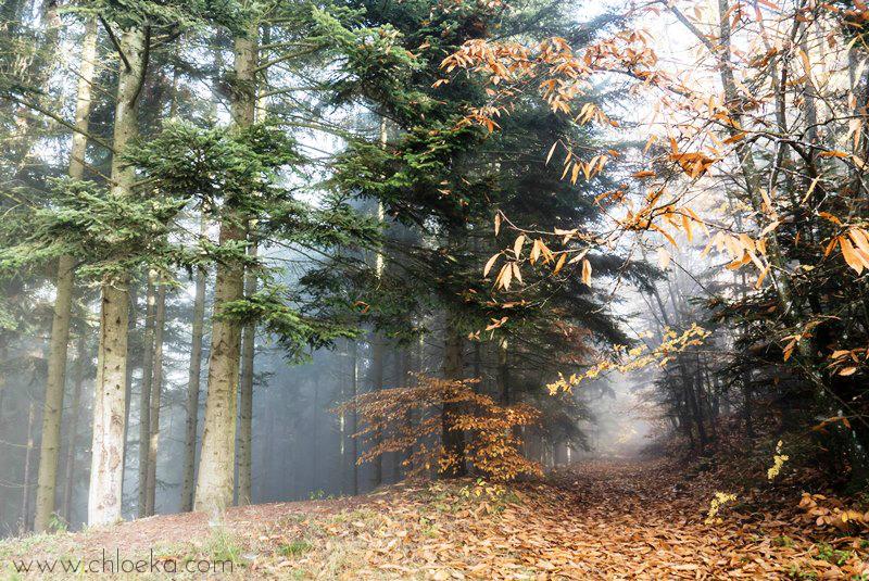 chloeka- grendelbruch sous bois 1er nov 2015-2