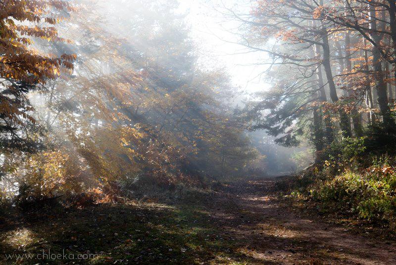 chloeka- grendelbruch sous bois 1er nov 2015-3