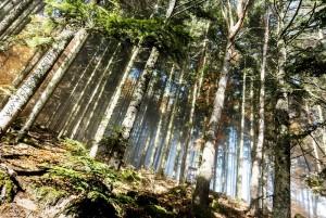 chloeka- grendelbruch sous bois 1er nov 2015