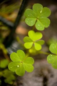 chloeka- jardin du soleil sous la pluie- août 2014-4