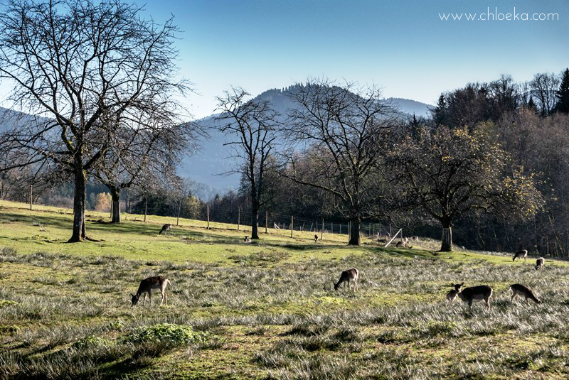 chloeka- randonnée Bad Peterstal en Foret Noire nov 2015_-18