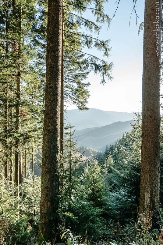 chloeka- randonnée Bad Peterstal en Foret Noire nov 2015_-2
