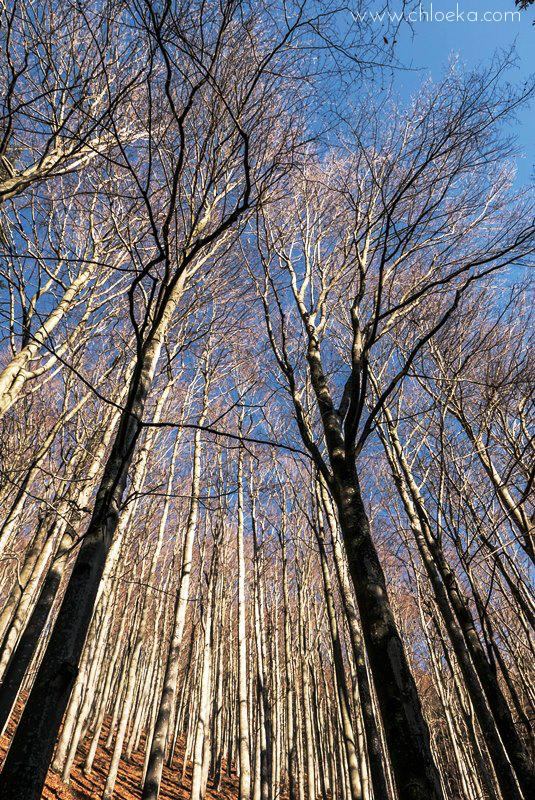chloeka- randonnée Bad Peterstal en Foret Noire nov 2015_-34