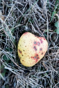 chloeka- randonnée Bad Peterstal en Foret Noire nov 2015_-4