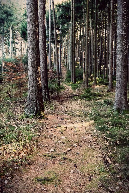 chloeka- randonnée Bad Peterstal en Foret Noire nov 2015_-44