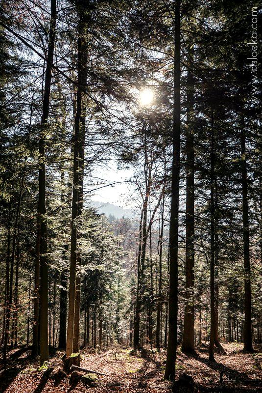 chloeka- randonnée Bad Peterstal en Foret Noire nov 2015_-62