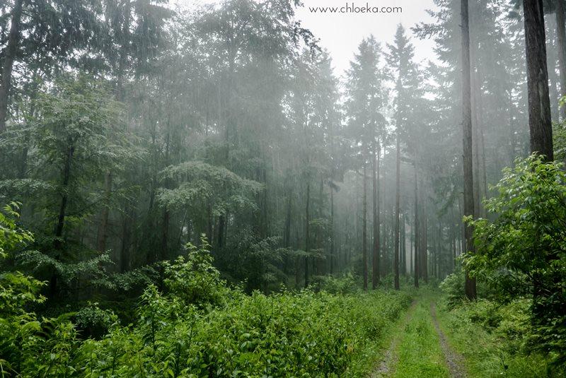 chloeka- randonnée Foret Noire Kappelrodeck- juin 2016-18