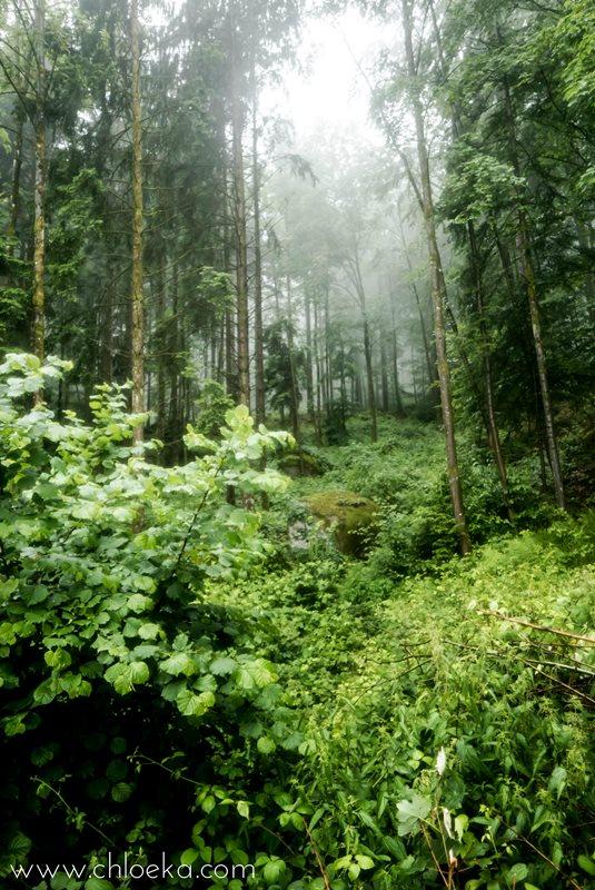 chloeka- randonnée Foret Noire Kappelrodeck- juin 2016-27