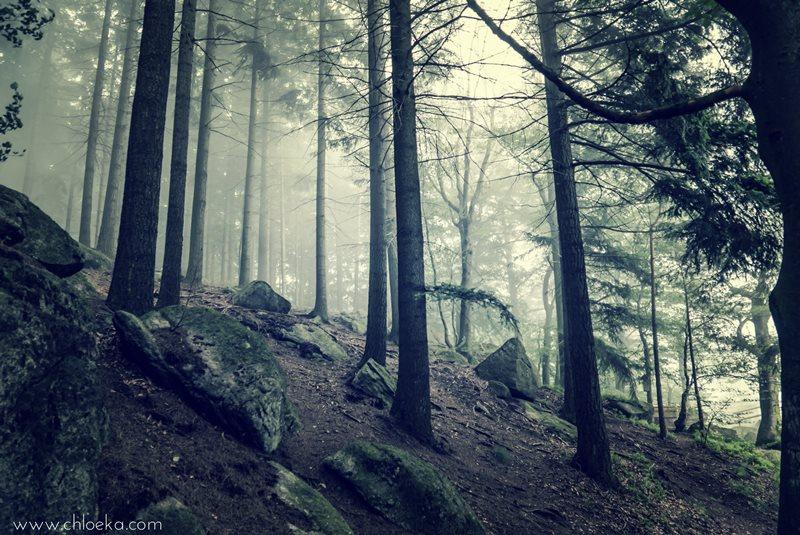 chloeka- randonnée Foret Noire Kappelrodeck- juin 2016-6