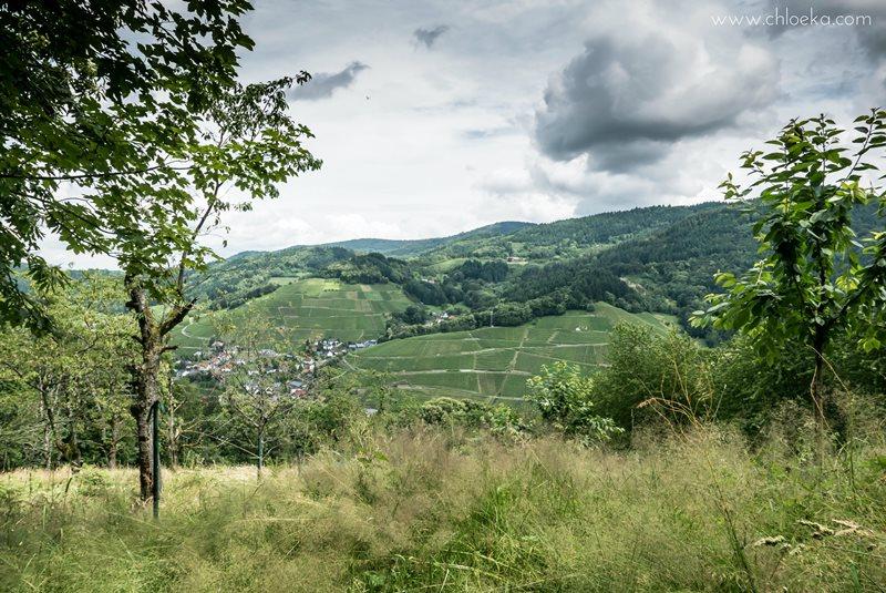 chloeka- randonnée Foret Noire Kappelrodeck- juin 2016